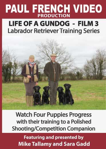 Life of a Gundog - Film 3 - Labrador Retriever Training Series